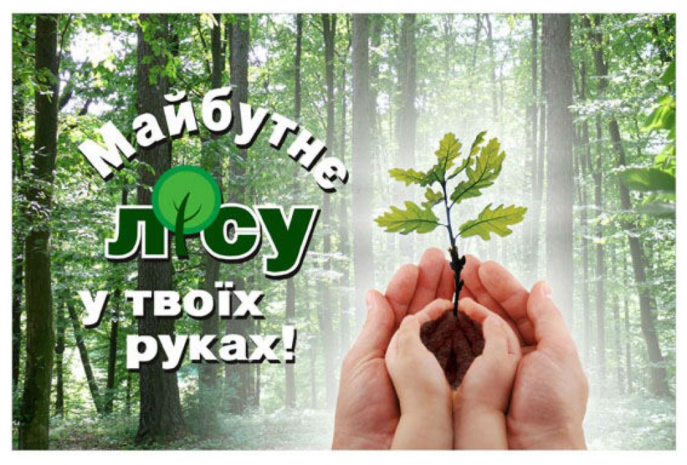 Лісівники Львівщини запрошують долучитися до акції «Майбутнє лісу у твоїх руках - 2019»